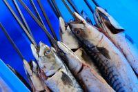 Der Fisch und der Grill
